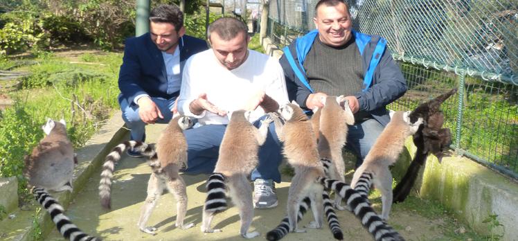 Darıca Hayvanat Bahçesinin sıcak dostları Lemurlar…