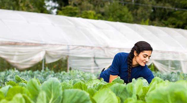 Genç Çiftçiye 30 bin lira hibe desteği için süre doluyor!