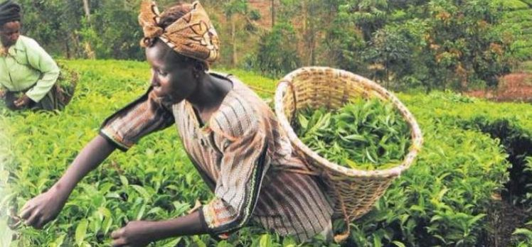 Türkiye Afrika'yı tarım üssü yapıyor