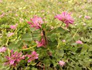 Büyükşehir'den çayır sineği ile ilgili açıklama