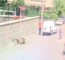 Köpeği ezip ölümüne sebep olan şahsa ceza kesildi